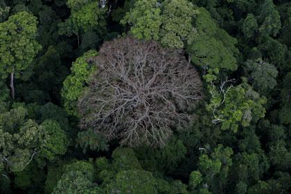 Il était une forêt de Luc Jacquet - Cine-Woman