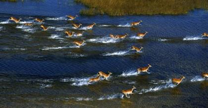 """Des """"gazelles"""" fuyant das l'eau African safari 3D"""