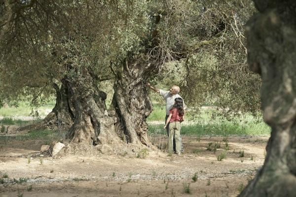 L'olivier d'Iciar Bollain