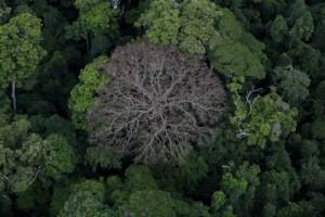Un arbre mort annonce le renouvellement de toute une forêt