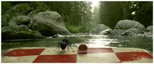 La fourmi noire et son alliée, la coccinelle