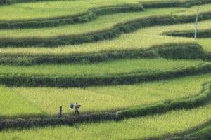 Dans la province du Guangxi, en Chine
