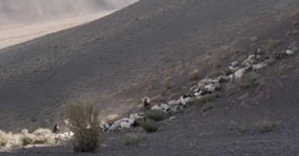 Les soeurs Quispe et leurs chèvres dans l'Altiplano chilien